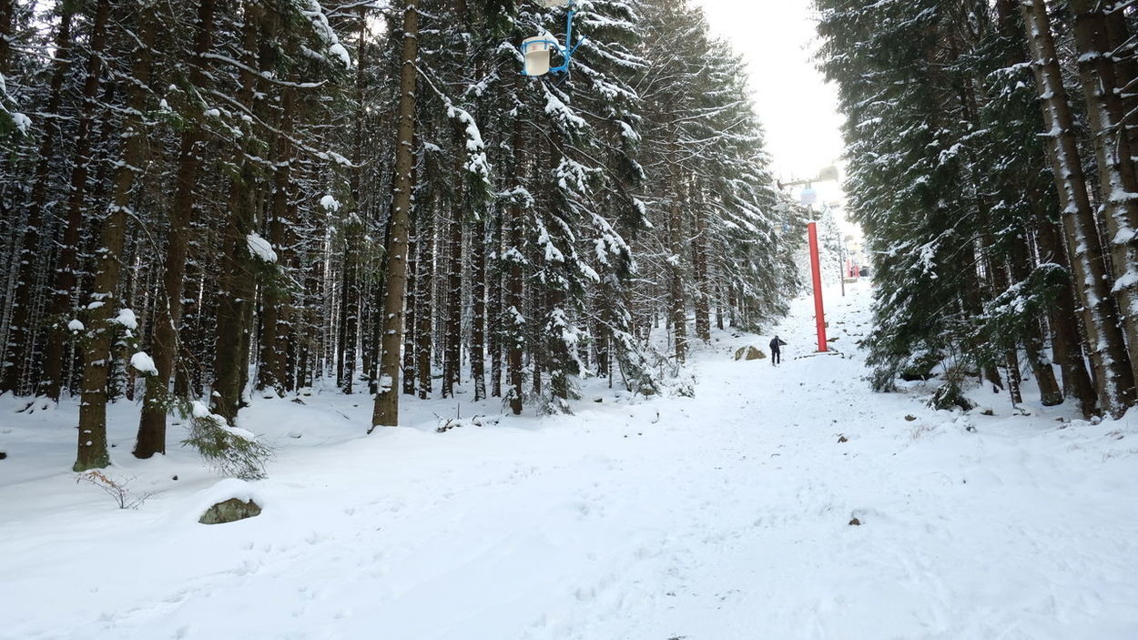 Beauty In Nature Cold Temperature Day Nature One Person Outdoors Red Accent Red Post Ski Lift Snow Snowing Treck Trecking Tree Weather Winter