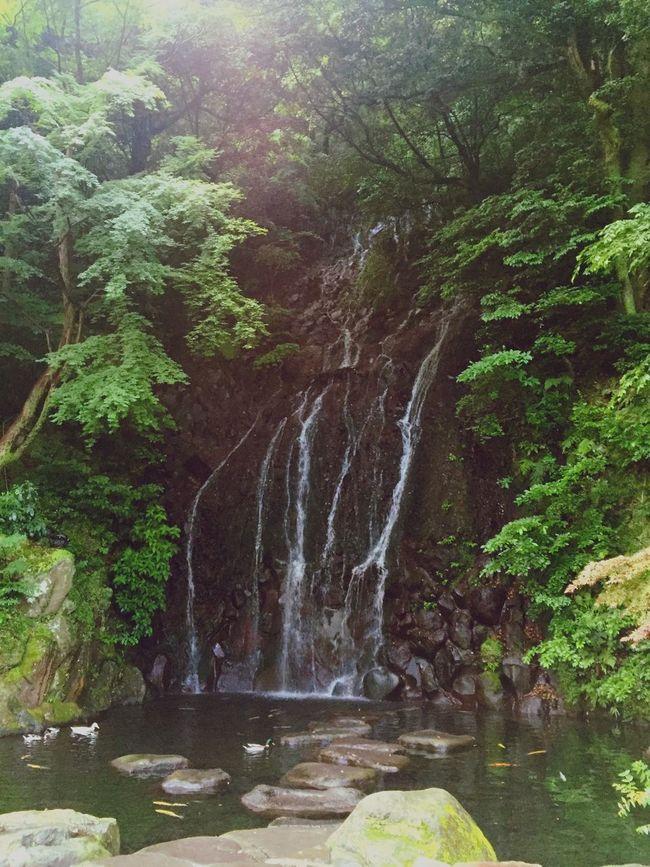 Odawara Little Waterfall Ducks