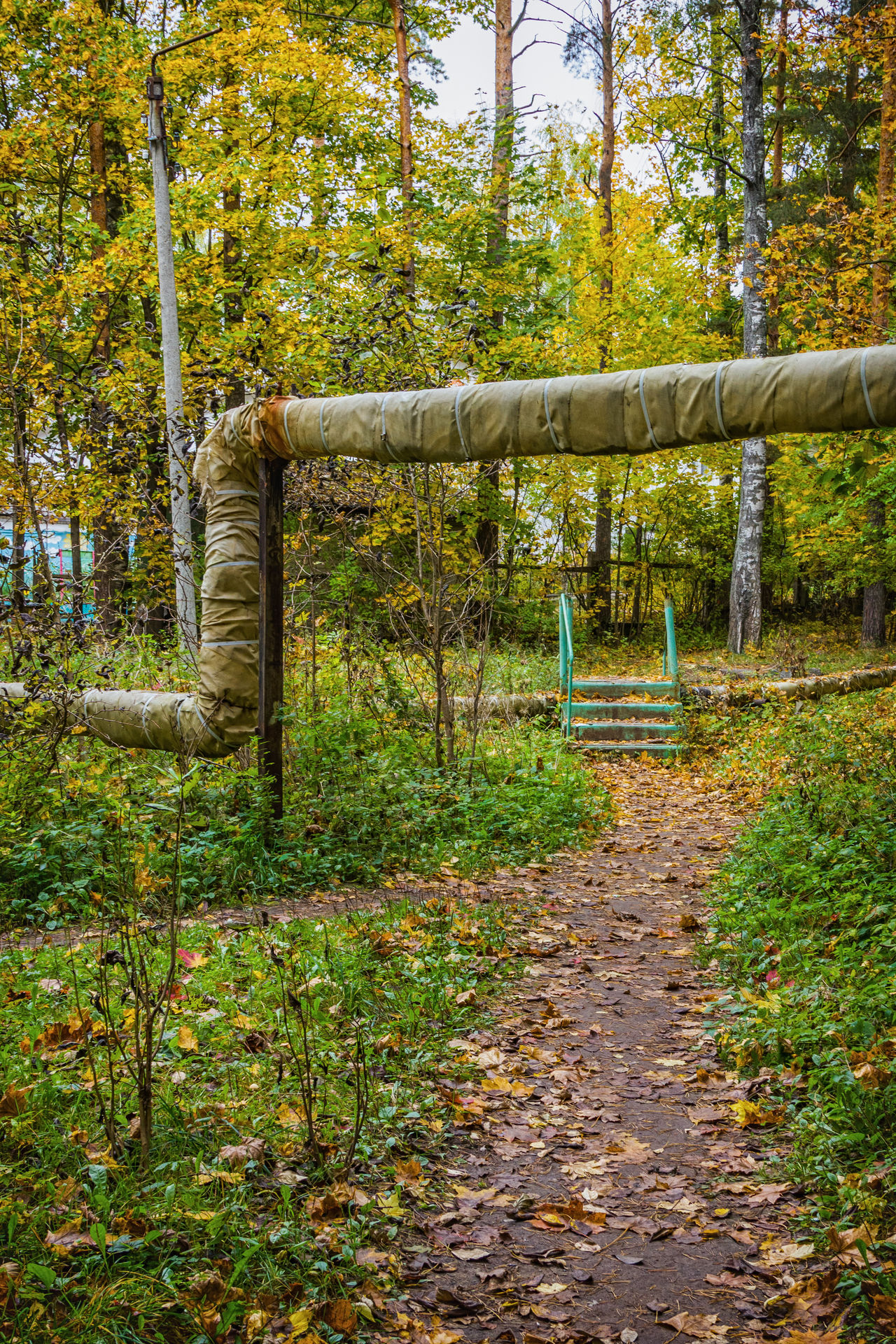 The path in the park, under the pipes Autumn Green Color Landscape Nature No People Outdoors Park Path Pipes Playground Russia Tree Trees Walking Yellow Color