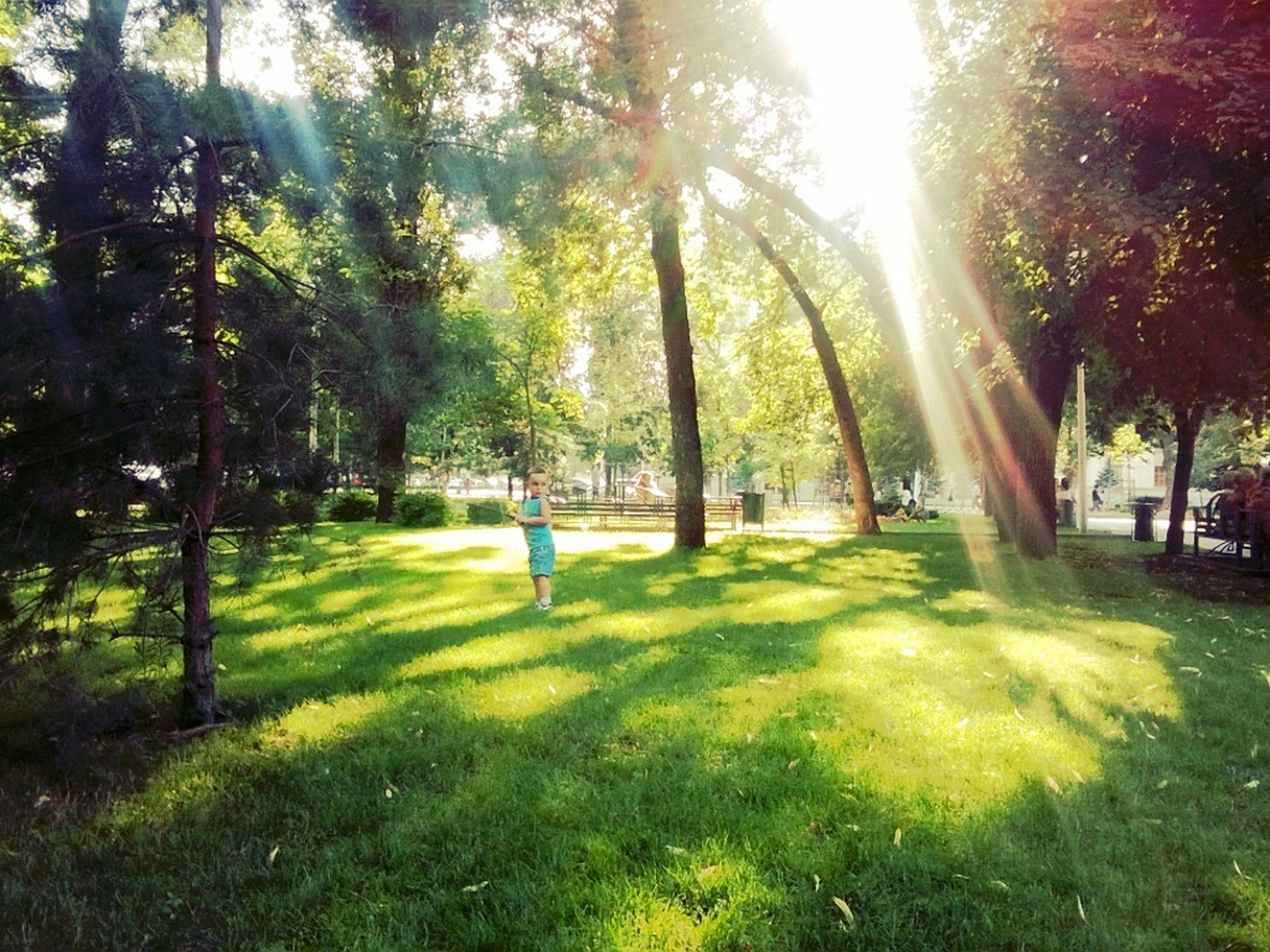 tree, grass, park - man made space, green color, growth, tree trunk, sunlight, lawn, park, tranquility, nature, grassy, shadow, footpath, tranquil scene, day, field, incidental people, beauty in nature, outdoors