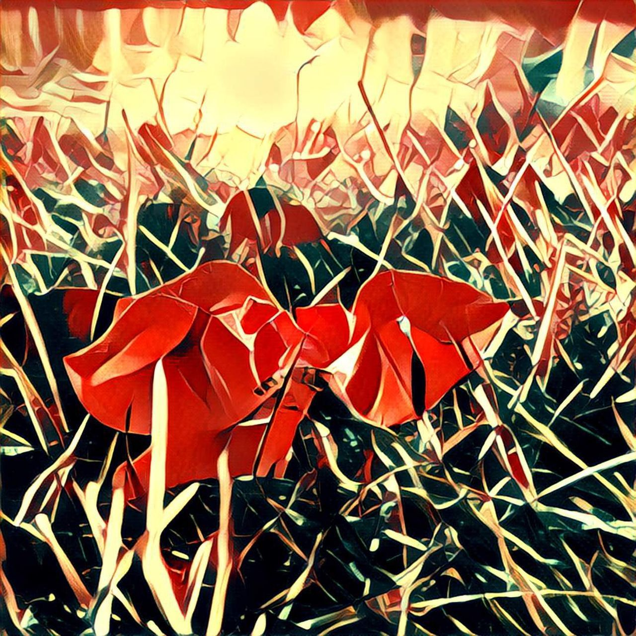 no people, red, close-up, outdoors, day, nature, fragility, beauty in nature, freshness
