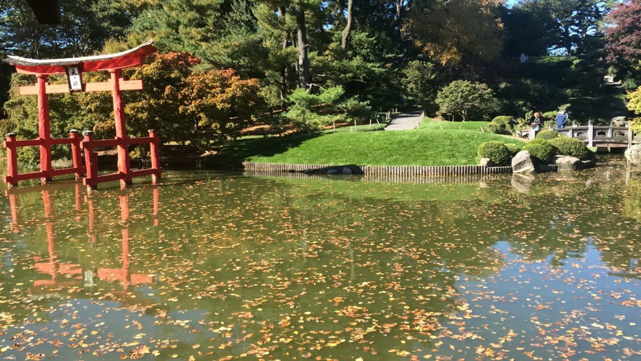 BrooklynBotanicGarden Lake Nature Outdoors Reflection Standing Water Water