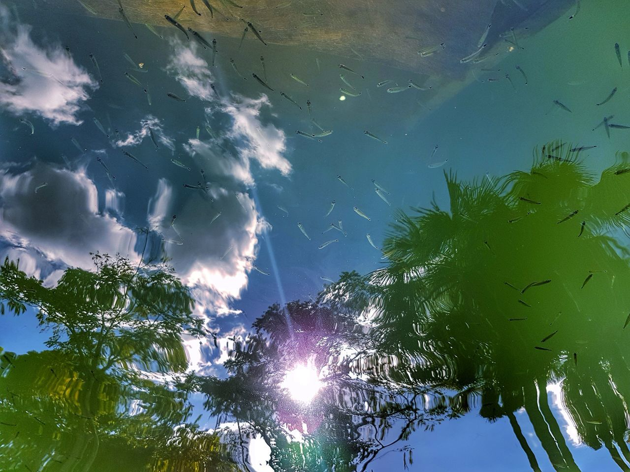 Fish Nature Tree Outdoors Beauty In Nature No People Forest Blue Day Sky Water Freshness Getty Images Premium Collection Bestsellers Beauty In Nature Reflection
