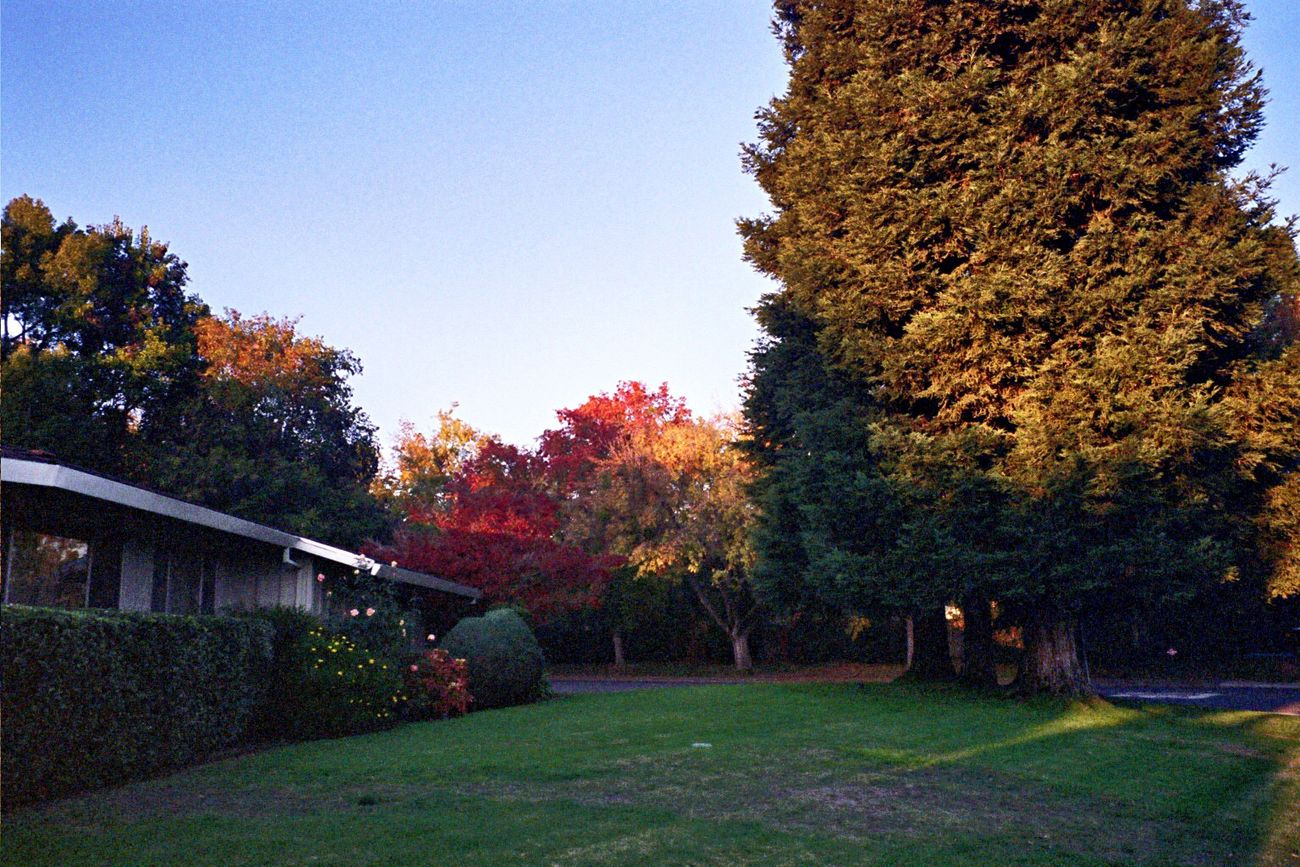 Tree Grass Autumn Outdoors Sacramento Neighborhood Film Klasse W Koduckgirl Autumn