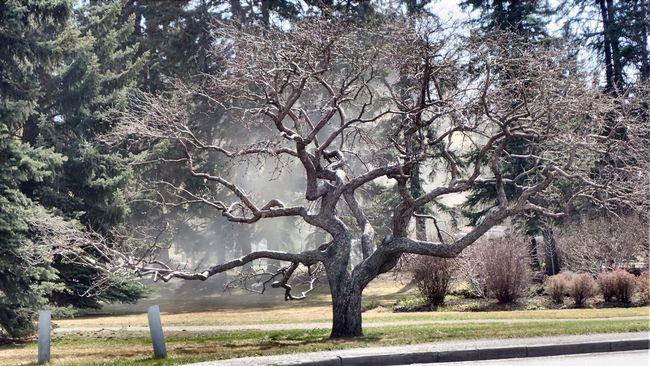 Tree. Tree Spring TreePorn Shaking Off The Dust Budding Budding Tree