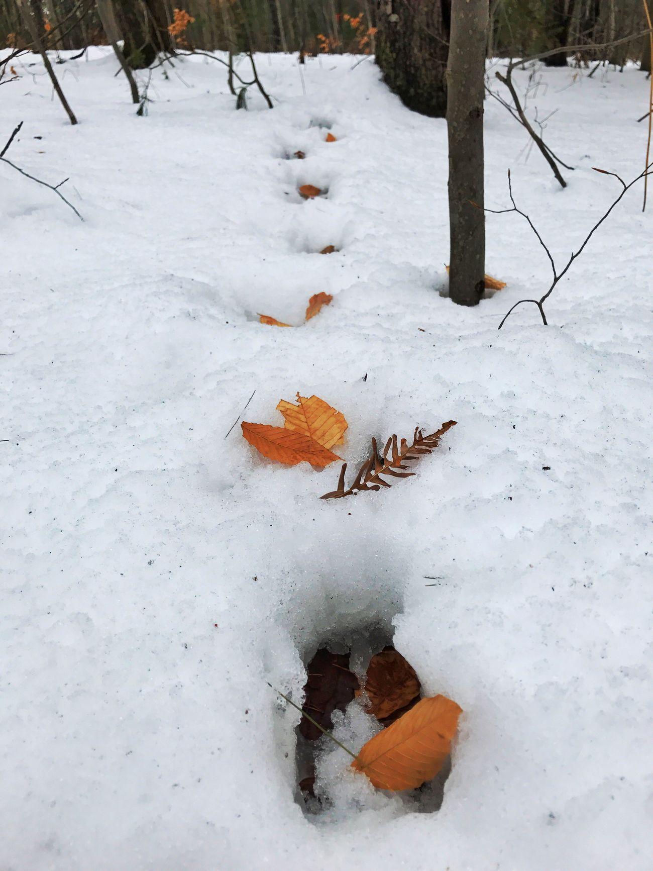 Winter Snow Deer Tracks Deer Trails