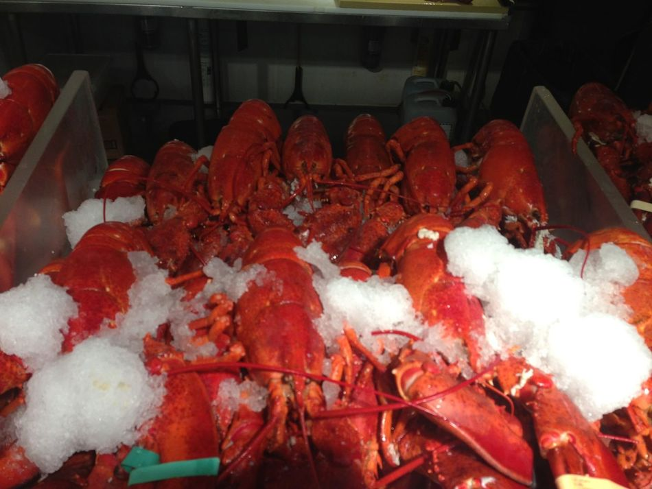 Beautiful stock photos of lobster, Animal Themes, Animals In The Wild, Close-Up, Cold Storage