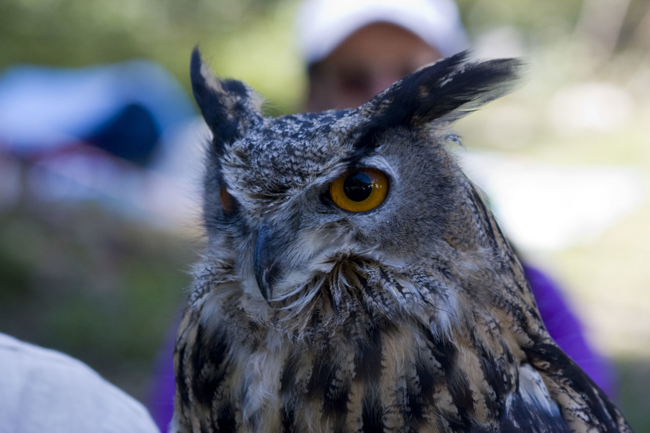 Alps Birds Mountains Nature Owls