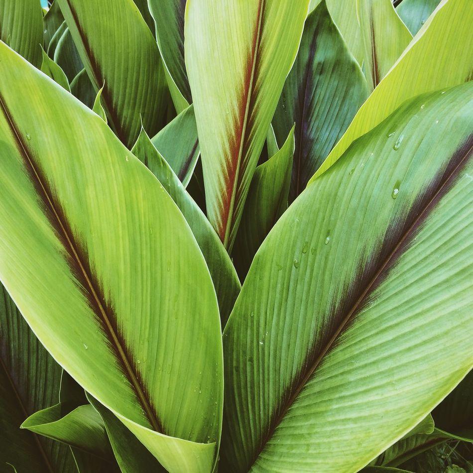 Beautiful stock photos of costa rica, Botany, Close-Up, Costa Rica, Day