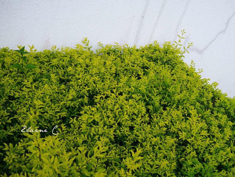 Szu Landscape Taking Photos Plants 未经许可请勿转载