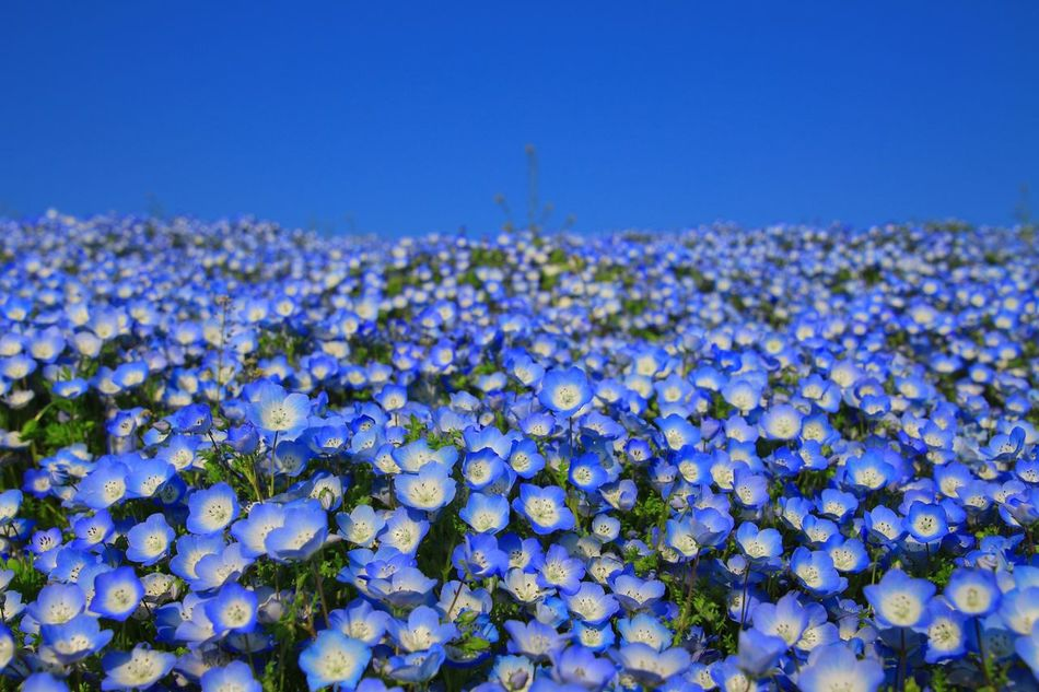 Flower Nature Beauty In Nature Growth Blue Tranquility Purple Clear Sky No People Outdoors Fragility Freshness Plant Day Close-up Sky Flower Head