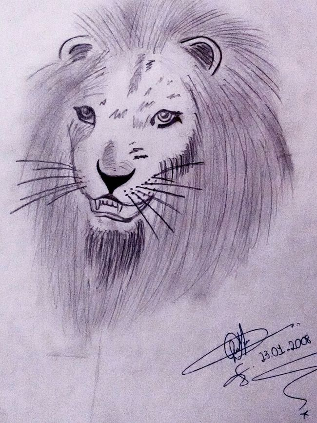 LM_colection Art Artistic Drawing Dibujo Desenho Lion 2008 Animal_collection Animal Portrait