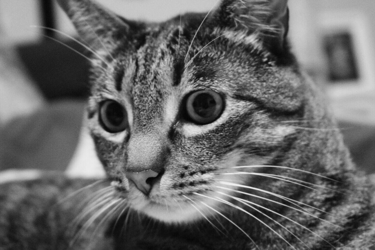 Wally Cat Madrid Alcorcon Nikond5300