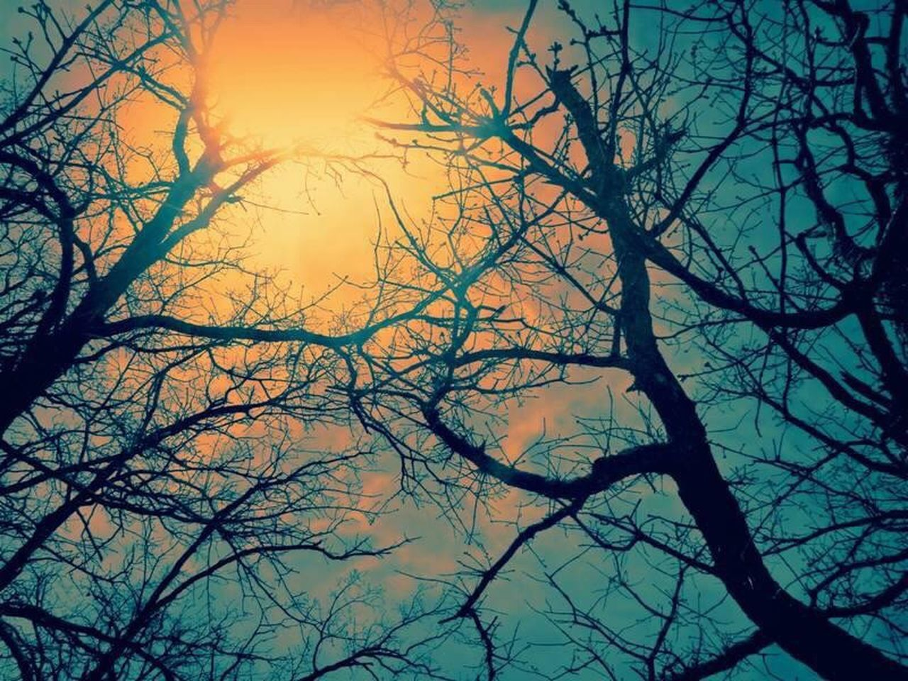 Tree Branch Nature Bare Tree Sky Beauty In Nature No People Silhouette Tranquility Sunset Low Angle View Outdoors Treetop Close-up Day