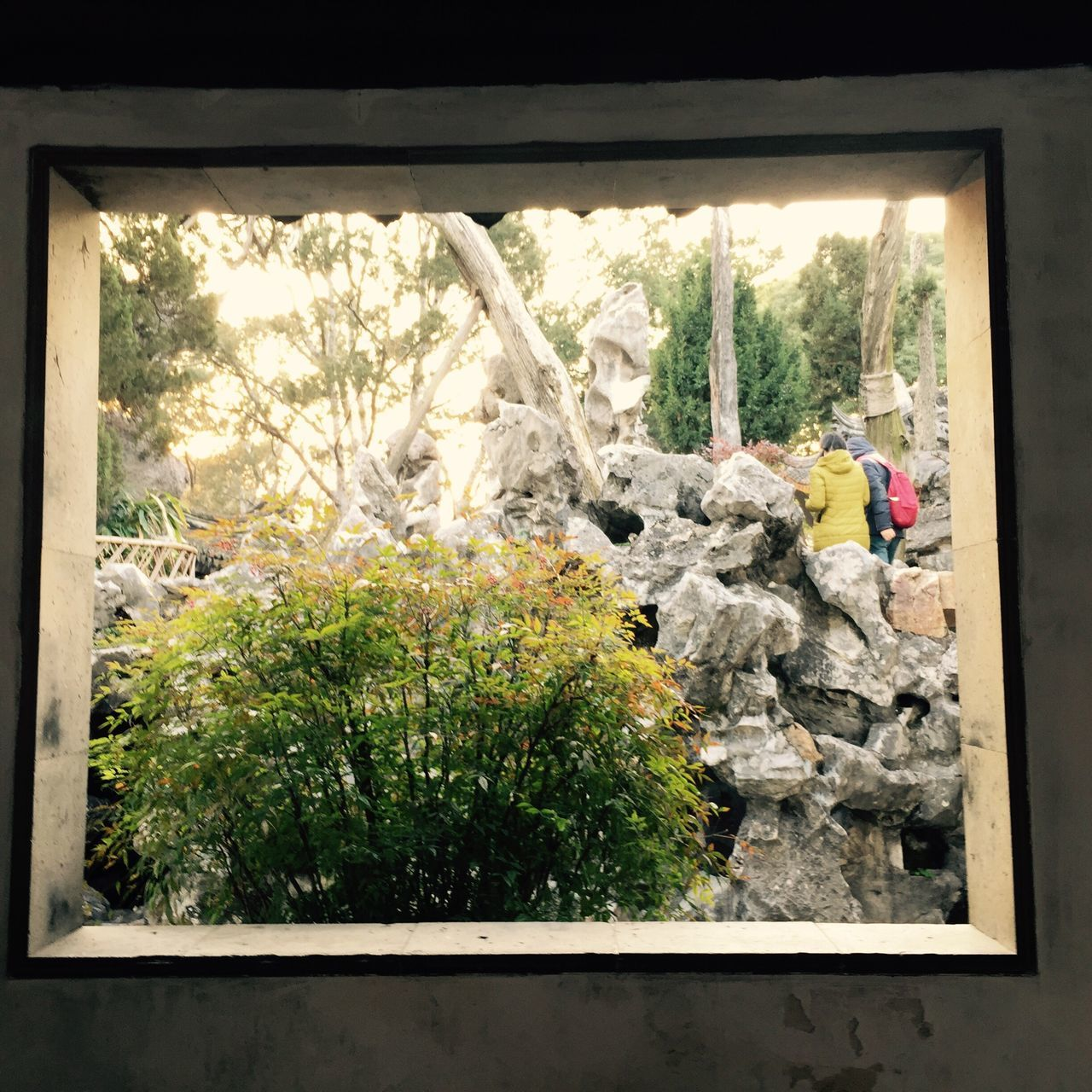 window, tree, growth, day, nature, plant, rock - object, indoors, no people, architecture, greenhouse