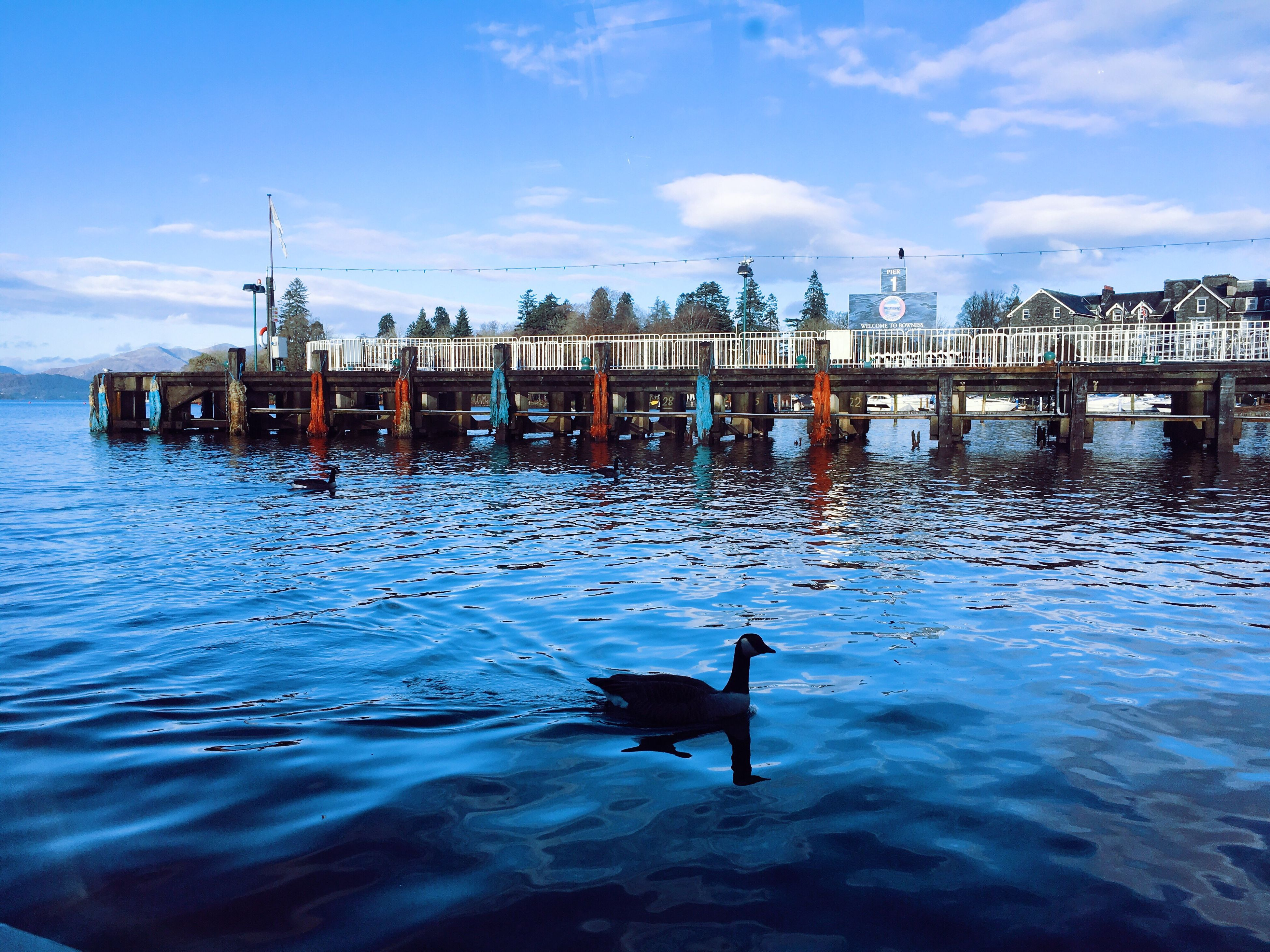 water, animal themes, animals in the wild, day, waterfront, animal wildlife, cloud - sky, built structure, sky, architecture, outdoors, bird, nature, one animal, wooden post, no people, beauty in nature, swimming, building exterior