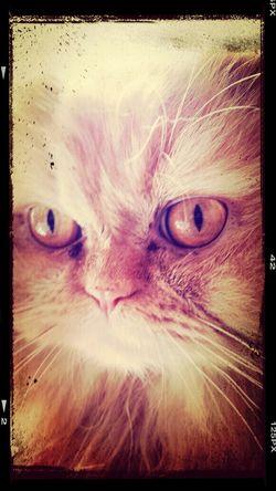 Cat Beatiful