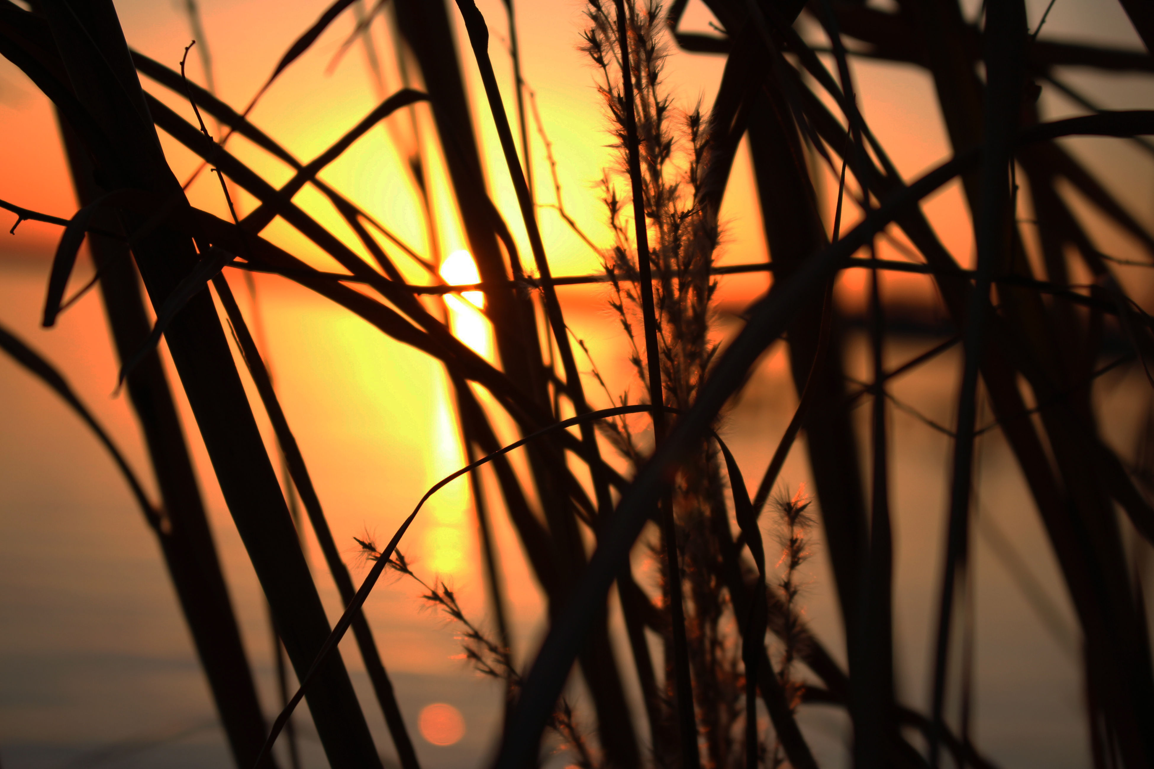 sunset, nature, silhouette, sky, beauty in nature, orange color, no people, scenics, sun, growth, outdoors, plant, tranquility, tranquil scene, tree, close-up, day