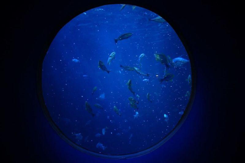 JEJU ISLAND  Aquarium Picture