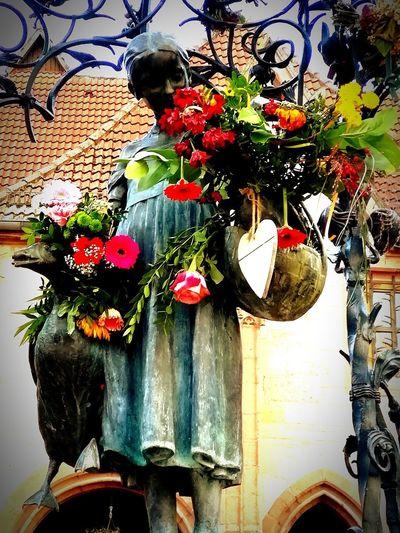 Flower Outdoors Day Close-up Göttingen  Gänseliesel