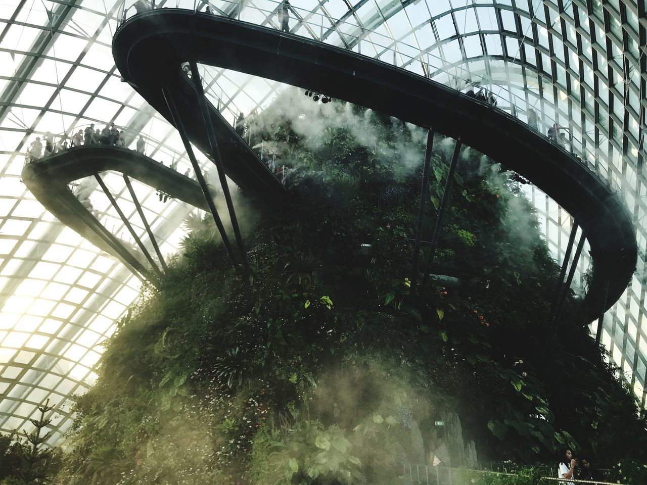 Clouddome Singapore Plant Day Built Structure Tree Architecture Indoors  Low Angle View Greenhouse first eyeem photo