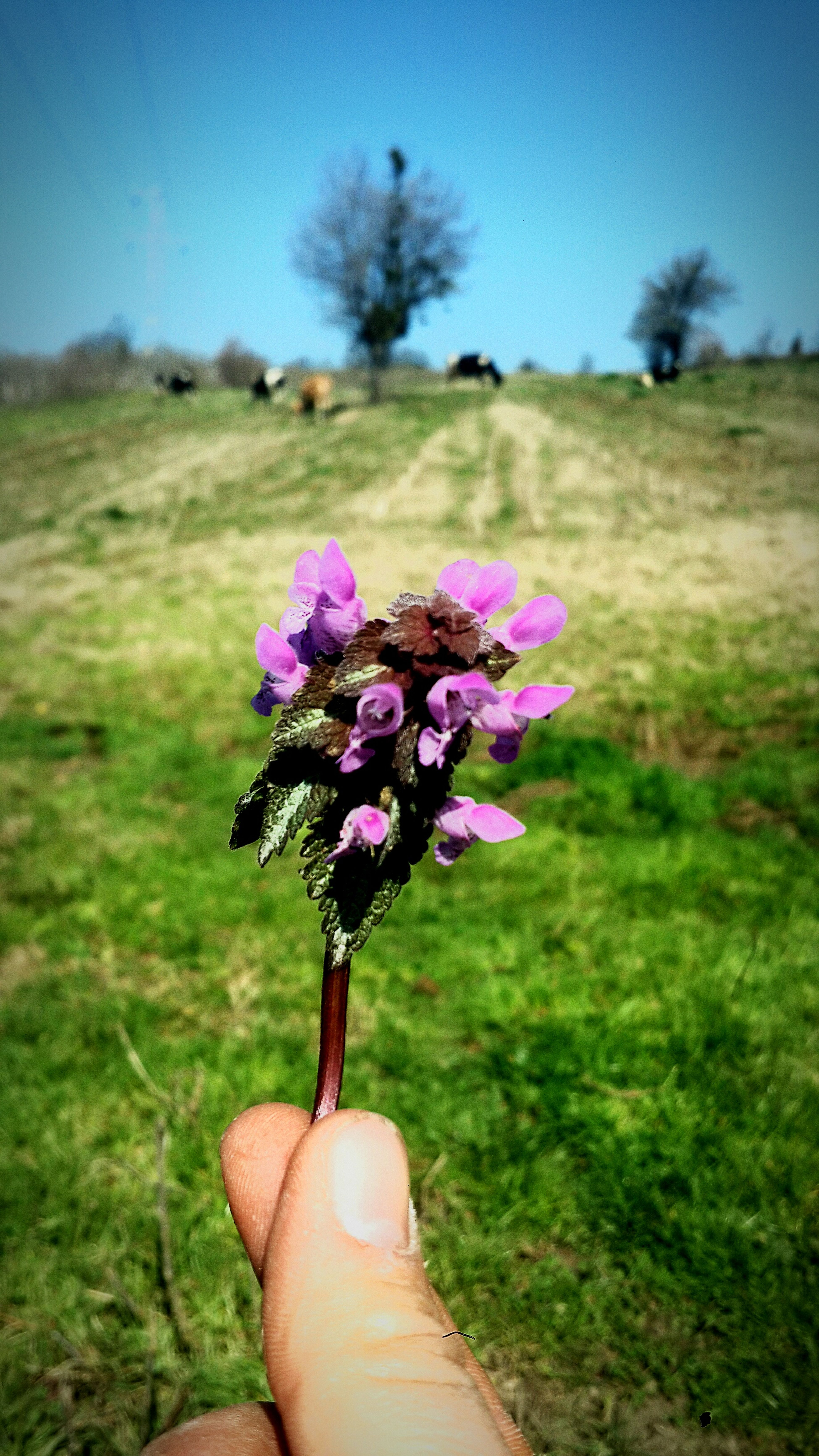 Spring Meadow Flowers Flower Head Nature Human Body Part Day People Close-up Freshness Flower Fragility Farm Farming Cow