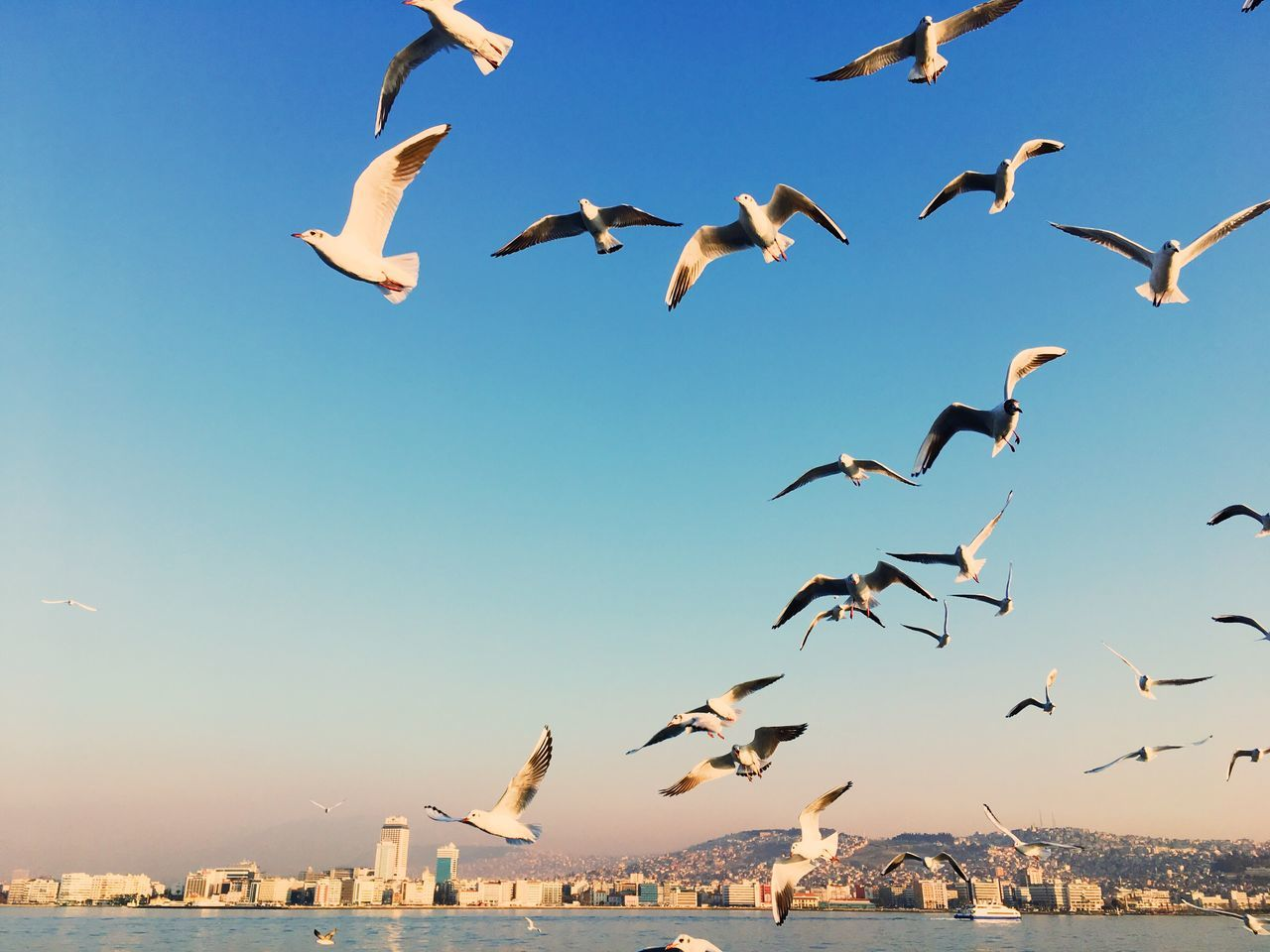flying, bird, animals in the wild, animal themes, spread wings, mid-air, large group of animals, flock of birds, animal wildlife, nature, motion, outdoors, no people, clear sky, day, seagull, water, sky, beauty in nature