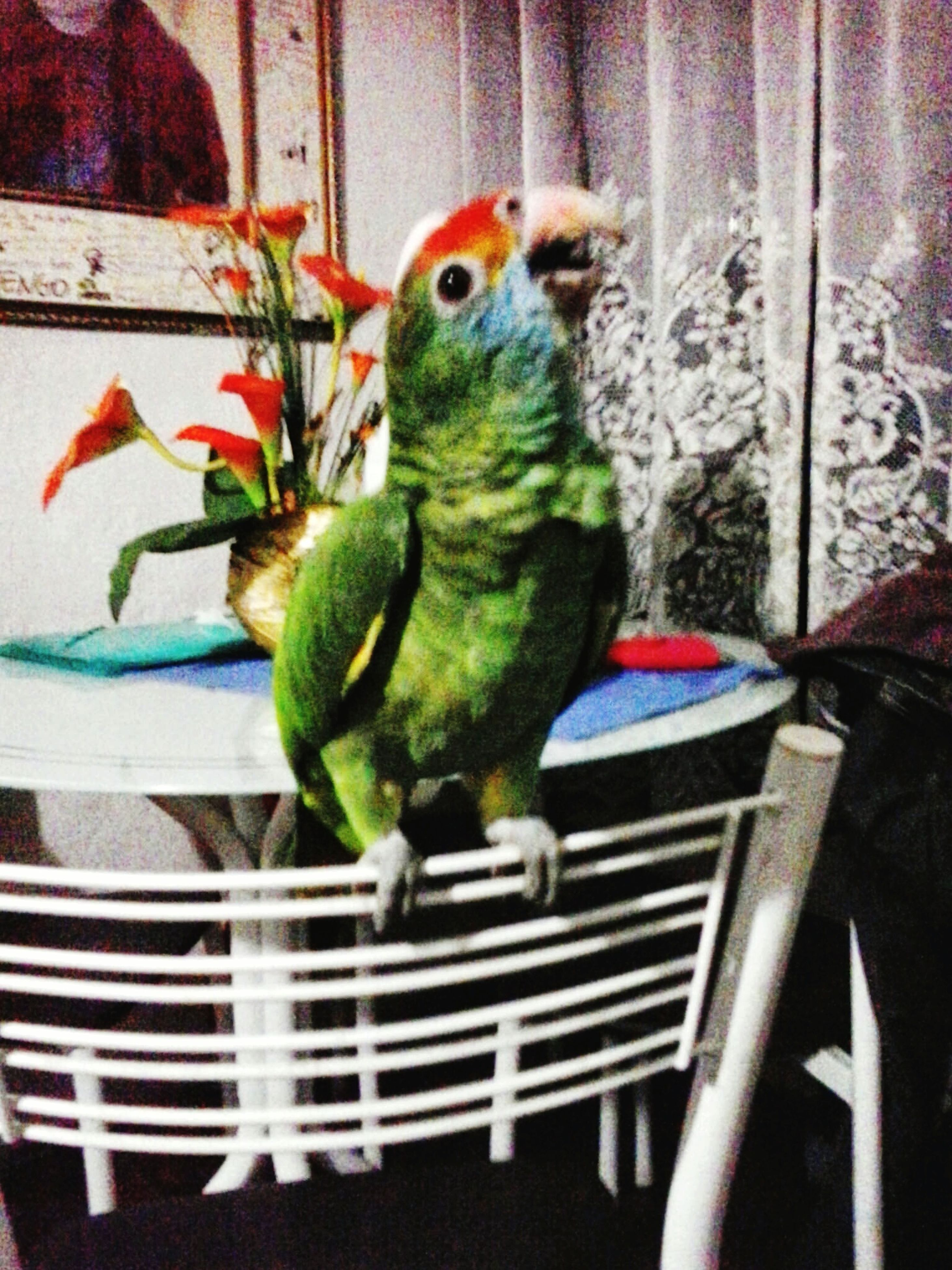 animal themes, bird, one animal, indoors, parrot, potted plant, perching, pets, close-up, plant, wildlife, leaf, cage, animals in the wild, window sill, no people, window, multi colored, wall - building feature, nature