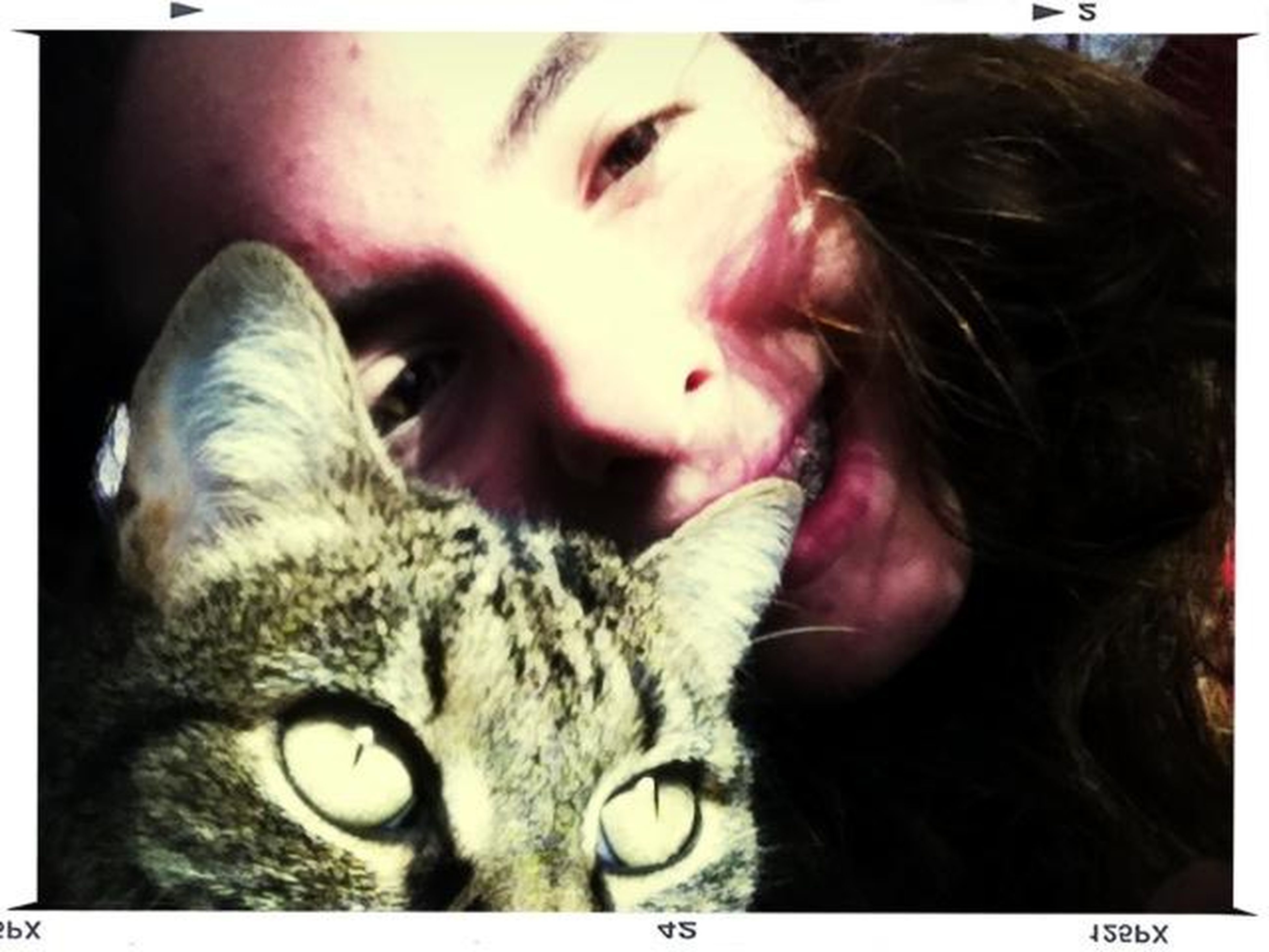 transfer print, auto post production filter, indoors, looking at camera, portrait, headshot, person, close-up, domestic cat, pets, lifestyles, cat, leisure activity, domestic animals, front view, one animal, head and shoulders, young women