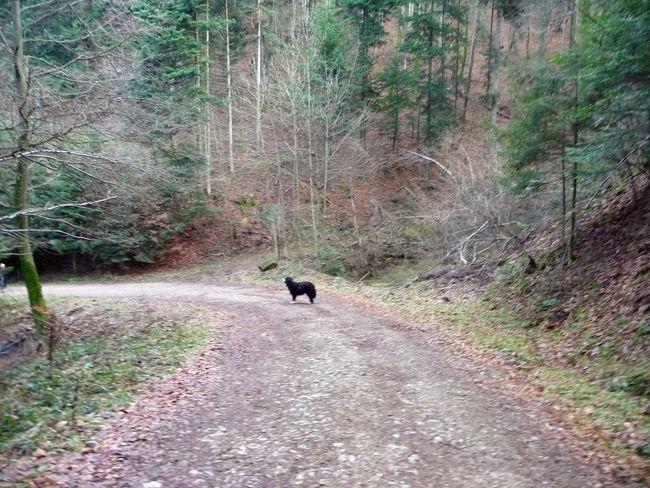 2008 Animal Themes Blackforest Day December Dog Freiburg Nature No People One Animal Outdoors Schwarzwald Tree Walking Winter Wintertime