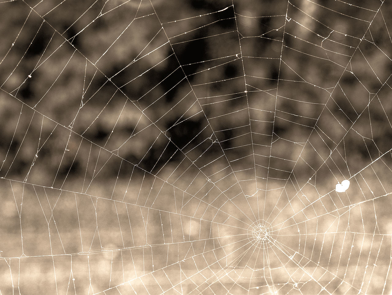 spider web, web, nature, spider, outdoors, no people, close-up, focus on foreground, fragility, beauty in nature, backgrounds, complexity, day, water, animal themes, freshness