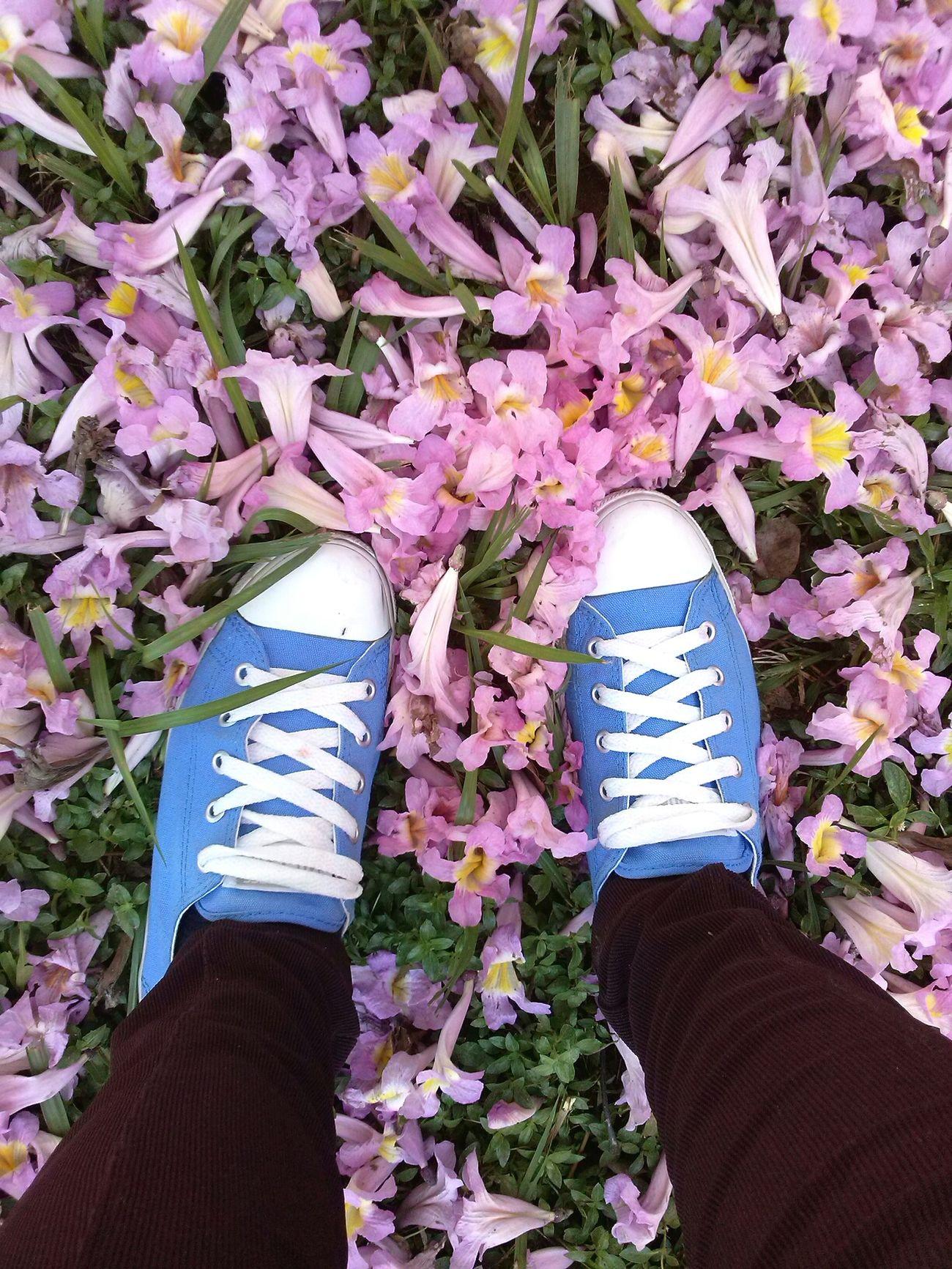 Pink Flower Ypê Allstar Blue Grass Light And Shadow
