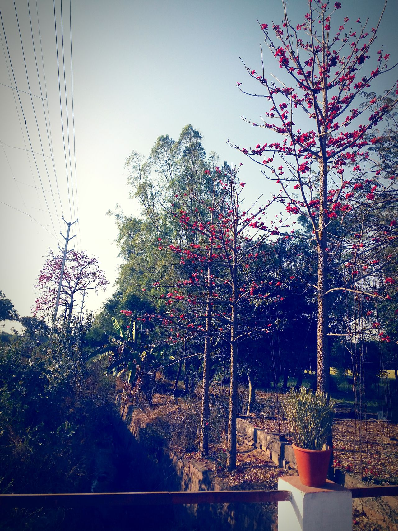Tree Nature Sky No People Growth Sunset Outdoors Beauty In Nature Outdoors❤ Outdoor Photography Fragility Edited This Myself Tranquility Flowers, Nature And Beauty Beauty In Nature Mobile Photography Nature Freshness Outdoorlife