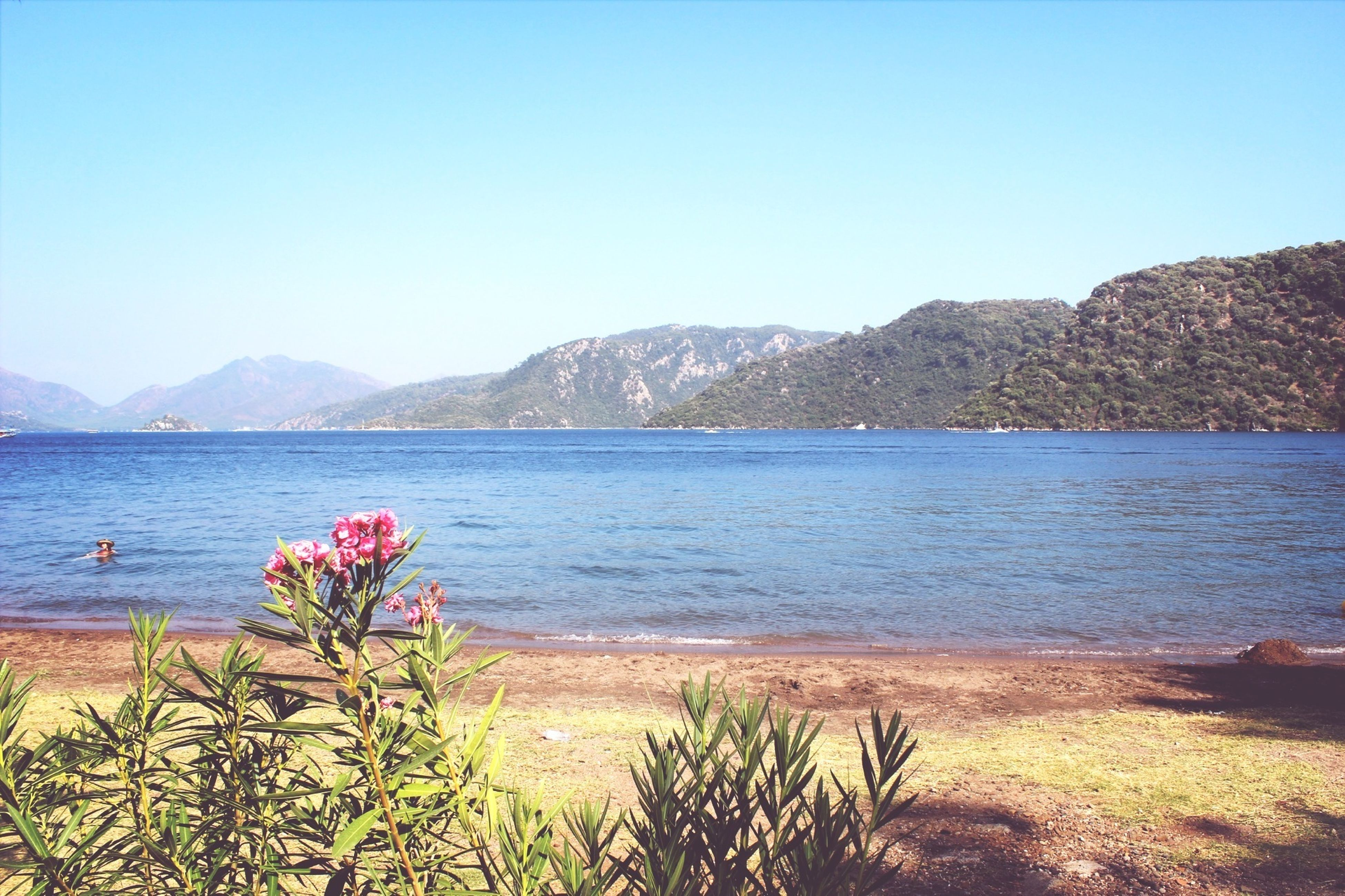 mountain, clear sky, water, beauty in nature, blue, mountain range, tranquil scene, tranquility, scenics, flower, copy space, nature, lake, sea, plant, idyllic, growth, day, beach, outdoors
