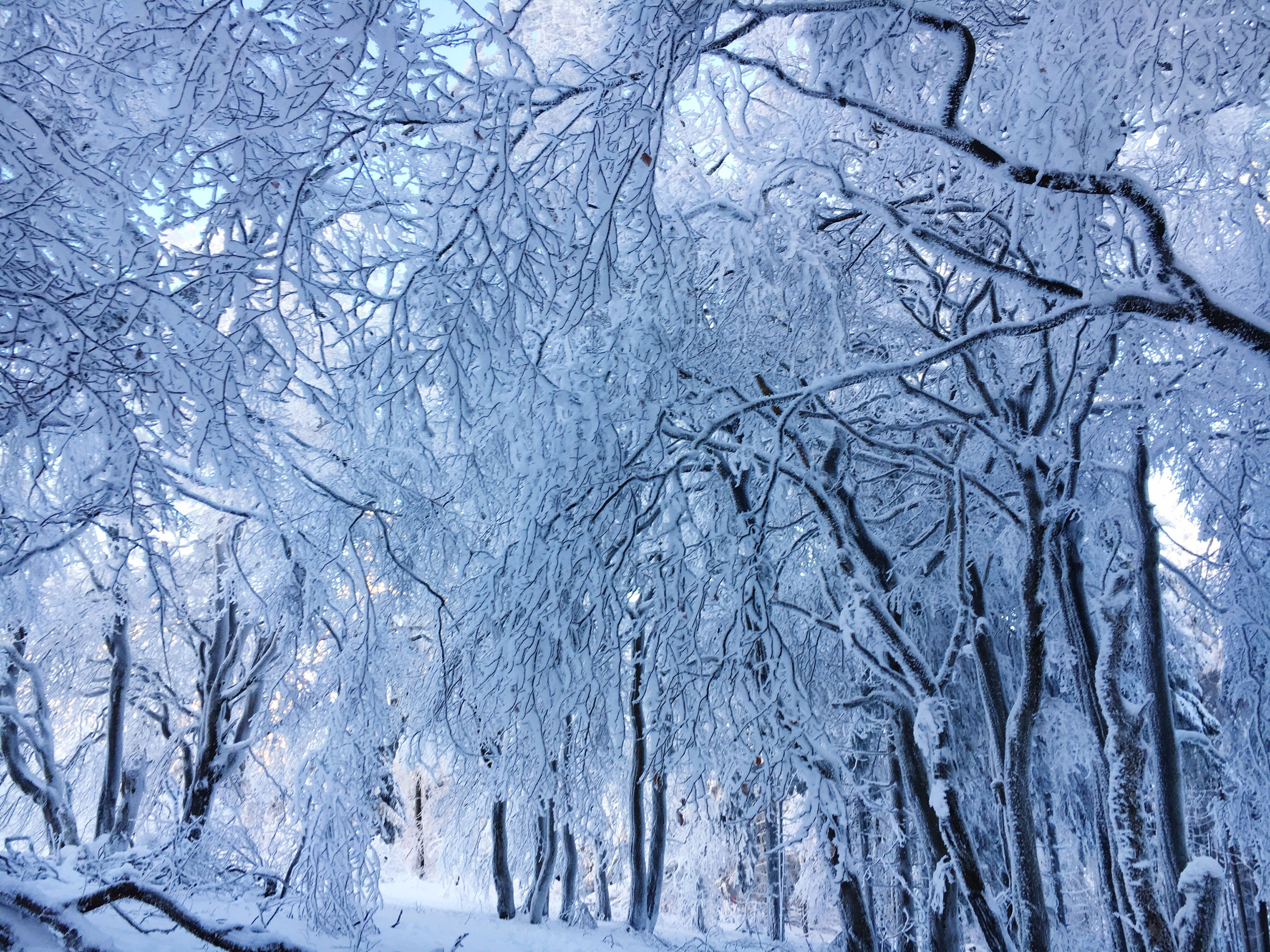 winter, cold temperature, tree, snow, snowflake, bare tree, nature, blue, frost, sky, no people, frozen, beauty in nature, outdoors, snowing, branch, close-up, day, backgrounds