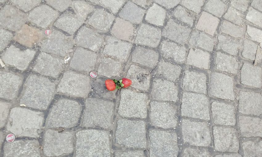 Red Day Outdoors High Angle View Nature No People Fragility Beauty In Nature Strawberries Strawberries On The Ground Thrown Strawberries thrown beauty Cobblestone Plant Beautiful Strawberries abandoned Tenderness romantic Sweetness, Sweet Strawberries little beauty Straeberries In The City strawberries and cobblestones