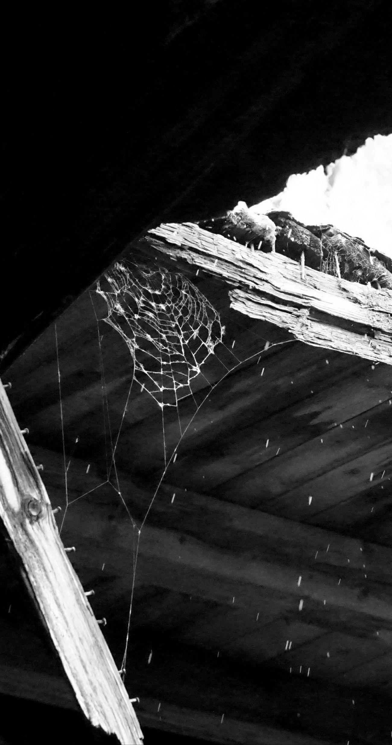 Water EyeEm Gallery EyeEm Best Shots EyeEm EyeEmNewHere Spidersweb Spider Every Picture Tells A Story Eyeemphoto Beauty In Nature Rainy Days☔ Raining Outside EyeEm Best Shots - Black + White