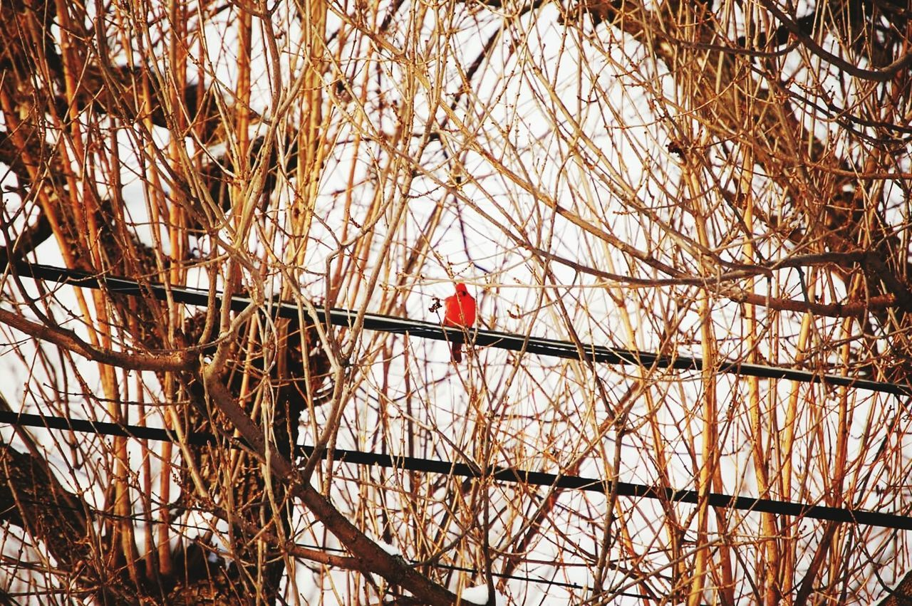 built structure, architecture, red, tree, day, outdoors, building exterior, branch, real people, nature, bird, one person, perching, animal themes, people
