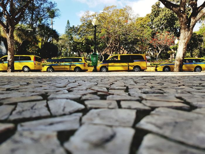 Cars Madeira Island Funchal Road Surface Yellow Color Grey Color Stone Mosaic Road Taxi Cityscape Cityscape Photography Photography Bildfolge Perspective Tree Day Outdoors No People Sky