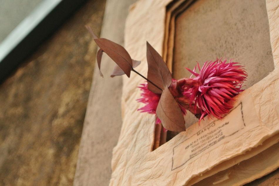 花美麗綻放 Blossom Flower Pintung Taiwan 台灣 大和頓物所 屏東 竹田驛站