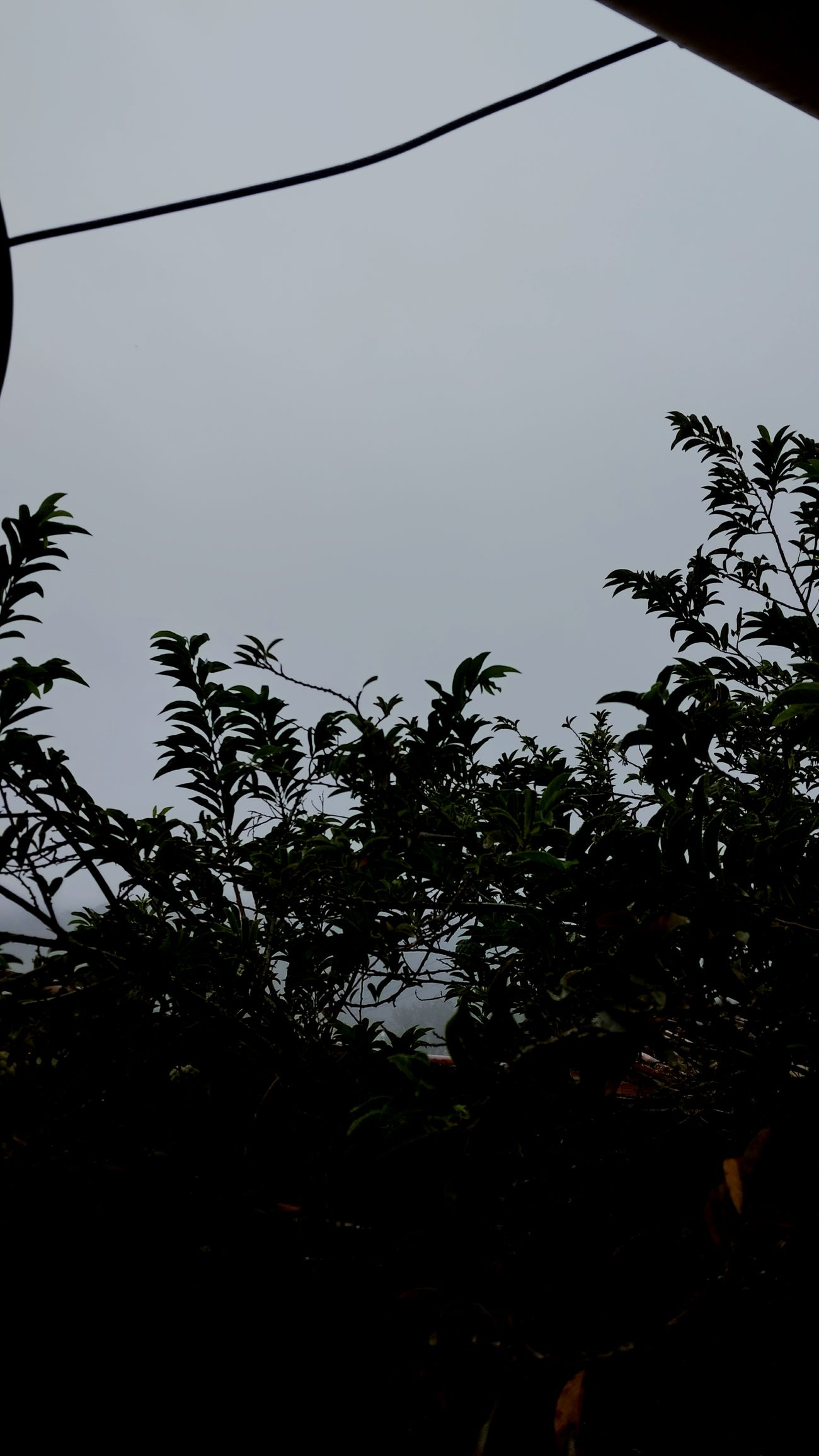 Grey Sky Grey Day Day Tropical Climate Sky Social Issues Nature Beauty In Nature No People Taquaritingadonorte Pernambuco Brazil Neblina Dramatic Sky