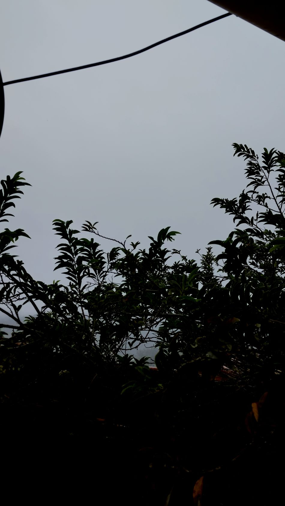 Grey Sky Grey Day Day Tropical Climate Sky Social Issues Nature Beauty In Nature No People Taquaritingadonorte Pernambuco Brazil Neblina Dramatic Sky