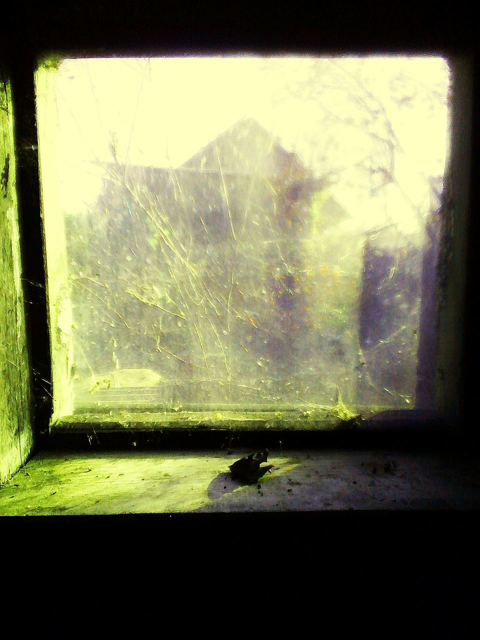 one animal, window, indoors, animal themes, insect, silhouette, no people, animals in the wild, close-up, day, nature, sky