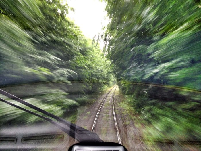 Highspeedtrain Forest