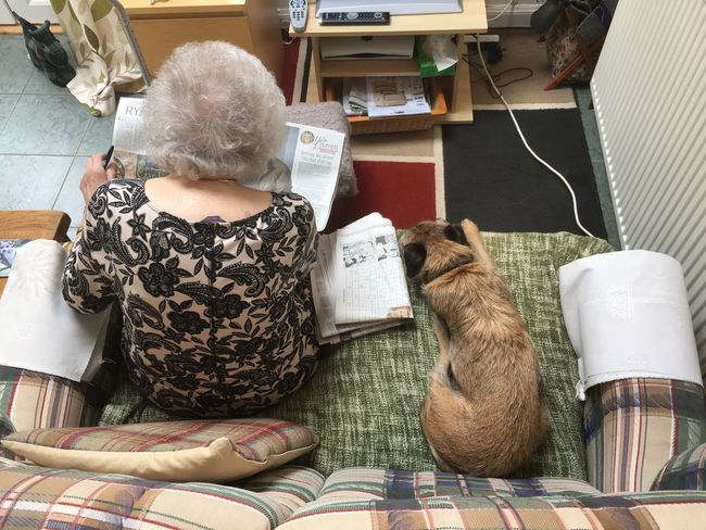 Reading Pets Indoors  Roles Old-fashioned Tranquil Scene