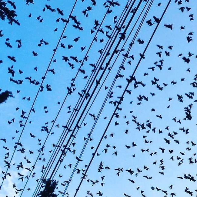 Volar! EyeEm Best Shots EyeEm Nature Lover Nature_collection Birds Bird Photography