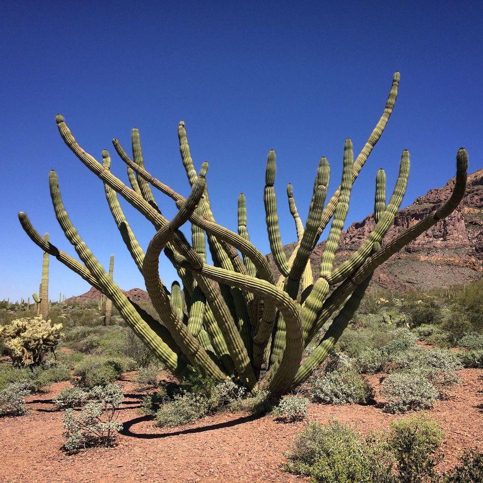 Beautiful stock photos of phoenix, Cactus, Cliff, Day, Desert