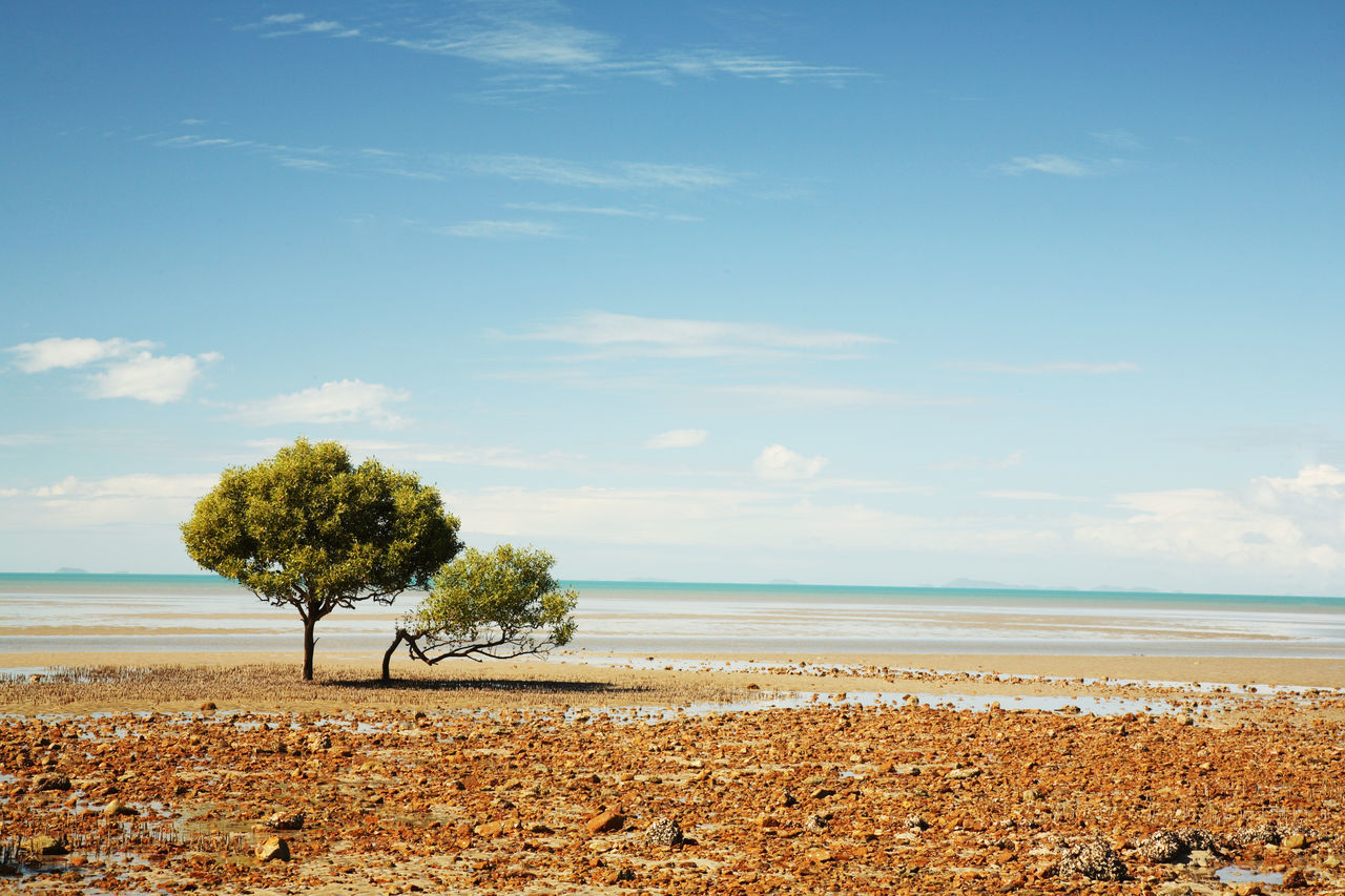 nature, tranquility, beach, sand, sky, growth, tranquil scene, sea, tree, no people, outdoors, beauty in nature, horizon over water, scenics, water, day