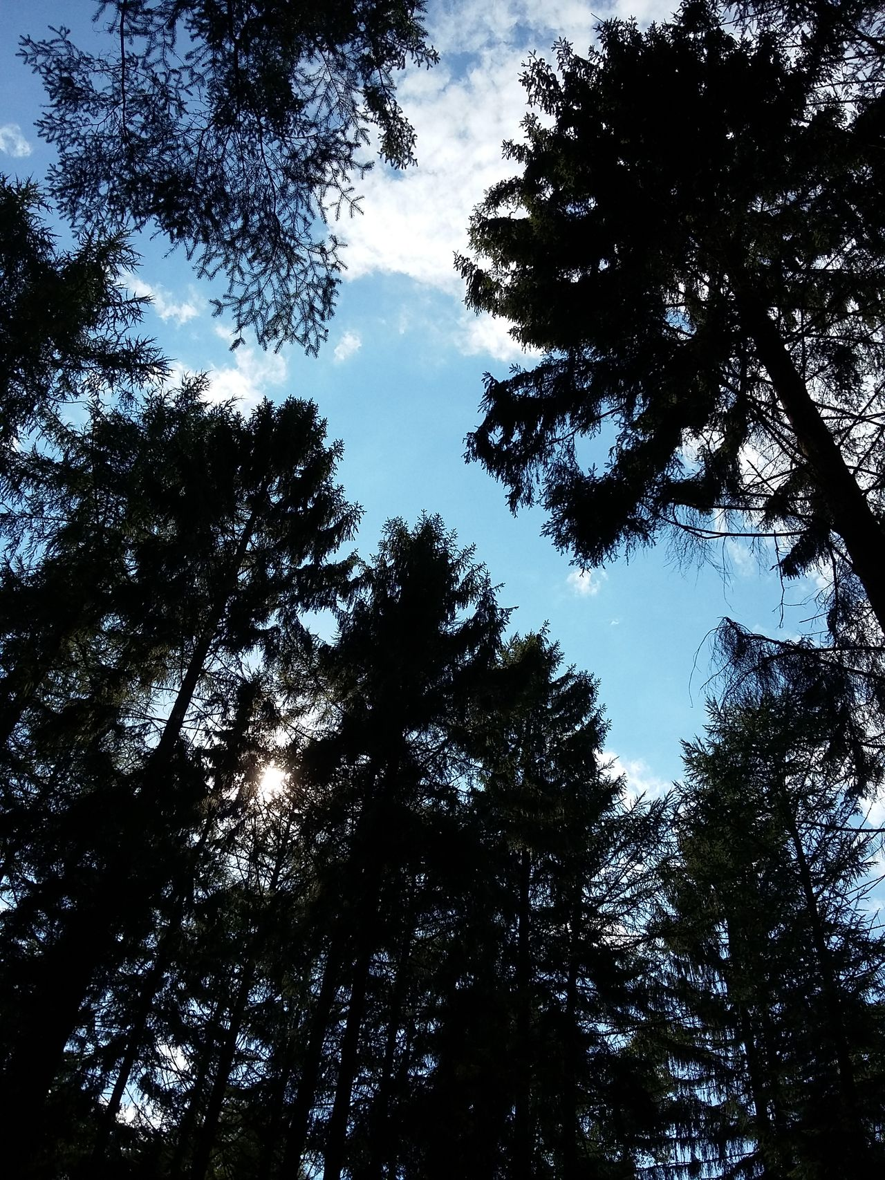 Trees I. · Germany Vareler Wald Tree Hugging A Tree Framed By Trees Forest Forest Photography Up Light And Shadow Blue Sky Sky And Clouds The Purist (no Edit, No Filter)