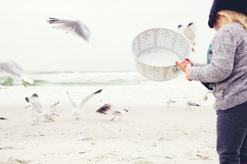 Beautiful stock photos of vogel, 2-3 Years, Animal Themes, Animal Wildlife, Animals In The Wild